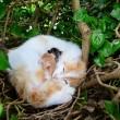 La gatta randagia che partorisce nel nido di piccioni056