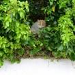 La gatta randagia che partorisce nel nido di piccioni03
