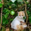 La gatta randagia che partorisce nel nido di piccioni04