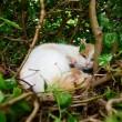 La gatta randagia che partorisce nel nido di piccioni05