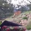Video YouTube: il puma vuole entrare in casa, il gatto lo caccia 02