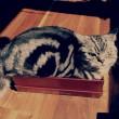 gatto-in-scatola