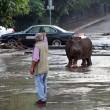 Georgia, inondazione a Tbilisi: almeno 8 morti. Animali in fuga dallo zoo02