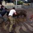 Georgia, inondazione a Tbilisi: almeno 8 morti. Animali in fuga dallo zoo03
