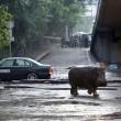 Georgia, inondazione a Tbilisi: almeno 8 morti. Animali in fuga dallo zoo10