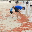 VIDEO YouTube, FOTO - Spiaggia di San Diego invasa dai granchi rossi