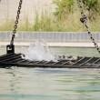 VIDEO YouTube. Isis uccide 5 spie: chiusi in gabbia e annegati in una piscina 3