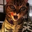 """VIDEO YouTube - FOTO Matilda, la """"gatta aliena"""""""
