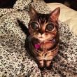 """VIDEO YouTube - FOTO Matilda, la """"gatta aliena"""" 2"""