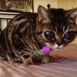 """VIDEO YouTube - FOTO Matilda, la """"gatta aliena"""" 3"""