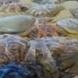 Meduse giganti invadono le spiagge del Regno Unito FOTO