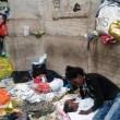 Milano, migranti nei negozi vuoti02