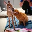 VIDEO YouTube - Russell, gatto infermiere: aiuta gli animali in clinica FOTO6