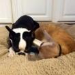 VIDEO YouTube - Russell, gatto infermiere: aiuta gli animali in clinica FOTO9