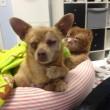 VIDEO YouTube - Russell, gatto infermiere: aiuta gli animali in clinica FOTO4