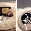 VIDEO YouTube - Russell, gatto infermiere: aiuta gli animali in clinica FOTO3