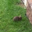 VIDEO YouTube. Mamma coniglio combatte col serpente per difendere cuccioli6