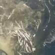 VIDEO YouTube: Cinque Terre, squalo azzurro attacca barca e ruba sacco di acciughe 01