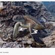 VIDEO YouTube - Google Maps ti porta... in fondo al mare 01