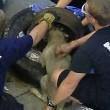 Usa, pompieri salvano cane con testa incastrata nel pneumatico 3