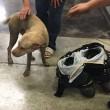 Usa, pompieri salvano cane con testa incastrata nel pneumatico