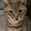 gatto nasce senza labbro e non riesce a bere e mangiare, 2 operazioni gli salvano la vita
