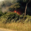 Aeroporto Fiumicino, ancora incendio: sospesi tutti i voli. Fiamme da Ostia a Maccarese3