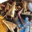Australia, 75 teste coccodrillo marino abbandonate in un frigo1