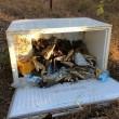 Australia, 75 teste coccodrillo marino abbandonate in un frigo2