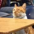 Bubba, gatto va a scuola: ora ha anche il tesserino2