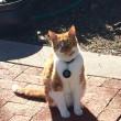 Bubba, gatto va a scuola: ora ha anche il tesserino9