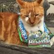 Bubba, gatto va a scuola: ora ha anche il tesserino8
