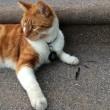 Bubba, gatto va a scuola: ora ha anche il tesserino6