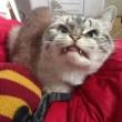 Loki, il gatto-vampiro star di Instagram 03