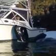 balena chiede a pescatori di toglierle busta2