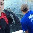 balena chiede a pescatori di toglierle busta