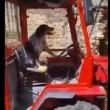 VIDEO YouTube - Cane guida trattore a San Mauro Cilento4