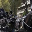 Casamonica funerale sfacciato: cavalli, Padrino, Rolls Royce4