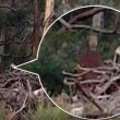 "Video Youtube - ""Fantasma nel bosco"": foto fake o realtà?"