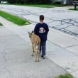 Ragazzo di 10 anni aiuta cervo cieco
