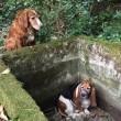 Cane cade cisterna, amico lo veglia per una settimana2