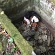 Cane cade cisterna, amico lo veglia per una settimana1