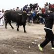 Toro de la Vega ucciso: Spagna, scontri con animalisti2