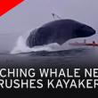 VIDEO YOUTUBE il salto spettacolare della balena sulla canoa3