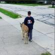 Ragazzo di 10 anni aiuta cervo cieco2