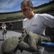 Pompei, tac sui calchi vittime: denti perfetti