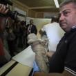 Pompei, tac sui calchi vittime: denti perfetti6