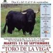 Toro de la Vega ucciso: Spagna, scontri con animalisti