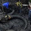 Agricoltore scava il suo campo e trova scheletro di Mammut