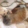 Cucciolo randagio assiste asino moribondo FOTO 3
